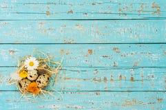 Os ovos da páscoa aninham-se na palha com as flores na luz - fundo de madeira azul da tabela Fotos de Stock