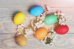 Os ovos da Páscoa, a cereja da mola ou o abricó colorido florescem na madeira Foto de Stock Royalty Free