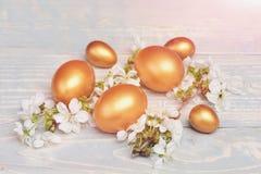 Os ovos da Páscoa, a cereja da mola ou o abricó dourado florescem na madeira Fotografia de Stock Royalty Free