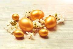 Os ovos da Páscoa, a cereja da mola ou o abricó dourado florescem na madeira imagem de stock royalty free