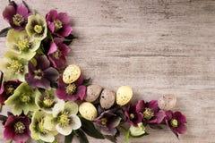 Os ovos da páscoa com mola florescem o vintage rústico denominado com espaço da cópia Vista superior, configuração lisa Imagens de Stock