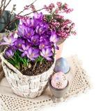 Os ovos da páscoa da mola florescem açafrões Foto de Stock Royalty Free