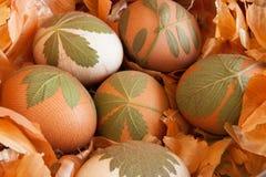 Os ovos da páscoa decorados com as folhas frescas, prontas para ser tingido com cebola descascam Foto de Stock