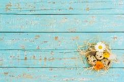 Os ovos da páscoa na palha aninham-se com as flores na luz - fundo de madeira rústico azul Foto de Stock