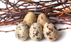 Os ovos de codorniz estão em um fundo branco Fotografia de Stock Royalty Free