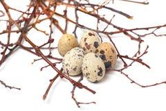 Os ovos de codorniz estão em um fundo branco Fotografia de Stock