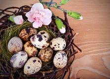 Os ovos e as flores de codorniz em um ninho de Easter foto de stock royalty free