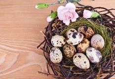 Os ovos e as penas de codorniz em um ninho de Easter fotos de stock
