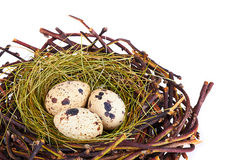 Os ovos e as penas de codorniz em um ninho de Easter fotografia de stock