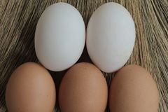 Os ovos e o pato eggs com as gramas moídas para trás Foto de Stock Royalty Free