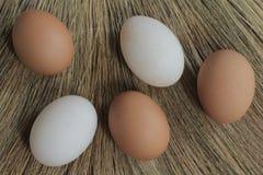 Os ovos e o pato eggs com as gramas moídas para trás Foto de Stock