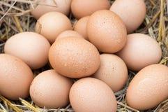 Os ovos em uma cesta são colocados na palha Imagem de Stock