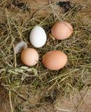 Os ovos frescos são dispersados no feno Fotos de Stock Royalty Free