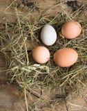 Os ovos frescos são dispersados no feno Imagens de Stock Royalty Free