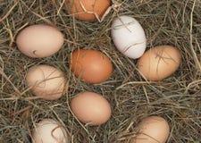 Os ovos no feno aninham-se na exploração agrícola de galinha Imagem de Stock