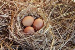 Os ovos no mundo Imagens de Stock Royalty Free