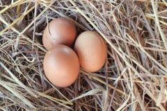 Os ovos no mundo Fotografia de Stock