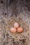 Os ovos são colocados em uma capoeira de galinha Foto de Stock