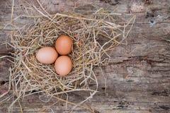 Os ovos são colocados em uma capoeira de galinha Fotos de Stock