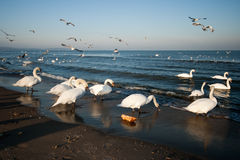 Os pássaros. Imagens de Stock