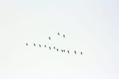 Os pássaros fotografia de stock