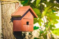 Os pássaros alaranjados do copyspace de madeira do aviário dirigem o birdbox da árvore Fotos de Stock