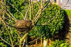 Os pássaros aninham-se em uma árvore no jardim, estação de mola, casa do pássaro, casas crafted animais imagem de stock