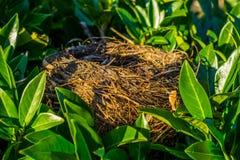 Os pássaros aninham-se escondido em uma árvore com folhas verdes, casa do pássaro, objetos crafted animais imagem de stock