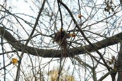 Os pássaros bonitos aninham-se em uma árvore em uma floresta Imagem de Stock Royalty Free