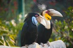 Os pássaros com boca grande Fotografia de Stock Royalty Free