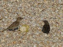 Os pássaros comem junto imagens de stock royalty free