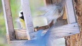Os pássaros comem sementes de girassol da floresta dos alimentadores na primavera vídeos de arquivo