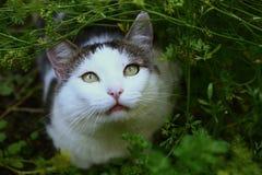 Os pássaros da caça do caçador do gato doméstico no verão jardinam Imagens de Stock