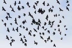 Os pássaros de Odin voam no céu imagens de stock royalty free