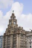 Os pássaros do fígado na construção do fígado em Liverpool Inglaterra Fotos de Stock