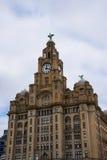 Os pássaros do fígado na construção do fígado em Liverpool Inglaterra Foto de Stock