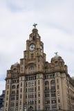 Os pássaros do fígado na construção do fígado em Liverpool Inglaterra Fotos de Stock Royalty Free