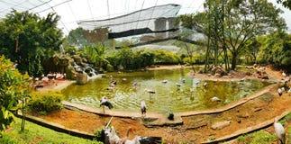 Os pássaros do flamingo dentro do pássaro do quilolitro estacionam, malaysia 2017 foto de stock royalty free