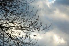 Os pássaros do outono voam afastado pássaros que da cunha os pássaros voam o céu triste das nuvens do tempo antes da chuva fotografia de stock royalty free