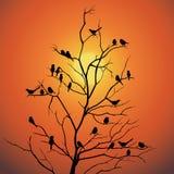 Os pássaros e o vetor backlit da luz solar do ramo de árvore projetam Foto de Stock Royalty Free