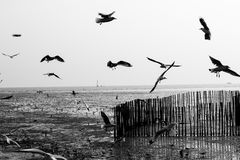 Os pássaros em céus hoje fotografia de stock