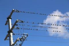 Os pássaros estão sentando-se em fios foto de stock royalty free