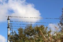 Os pássaros estão sentando-se em fios foto de stock