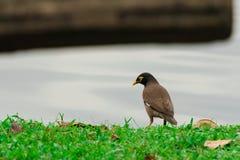 Os pássaros estão sonhando acordado Fotografia de Stock Royalty Free