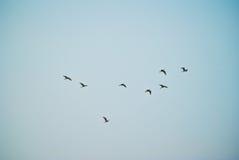 Os pássaros estão voando Foto de Stock