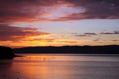 Os pássaros estão voando acima do lago antes do nascer do sol no lugar do paraíso em Nova Zelândia sul Imagem de Stock