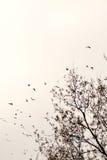 Os pássaros migram para o sul Imagens de Stock