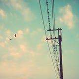 Os pássaros na linha elétrica cabografam contra o céu azul com backgroun das nuvens Fotografia de Stock Royalty Free