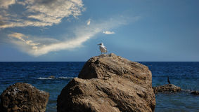 Os pássaros nas rochas a pouca distância do mar fotos de stock