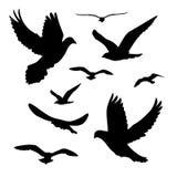 Os pássaros pretos das silhuetas isolaram a ilustração branca do vetor do fundo ilustração do vetor